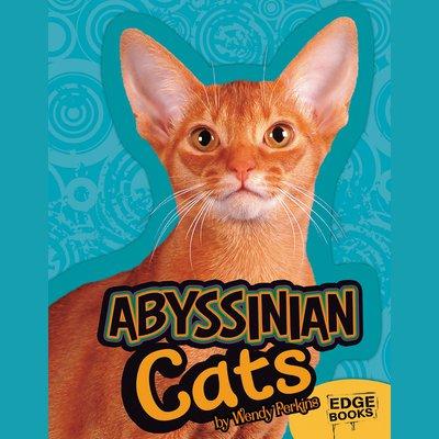 Abyssinian Cat Nz